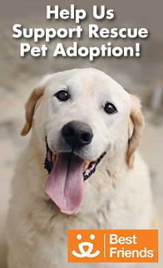 adoption org